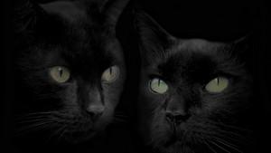 Beautiful Black Gatti