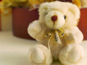 Beautiful Teddy
