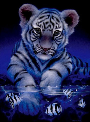 Beautiful Tiger Cub