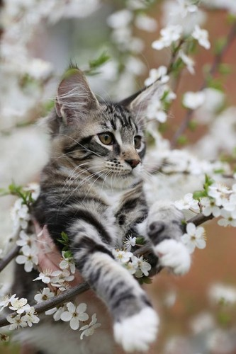 TheCountess 바탕화면 entitled Beautiful kitten