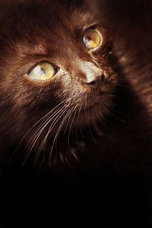 Brown ネコ