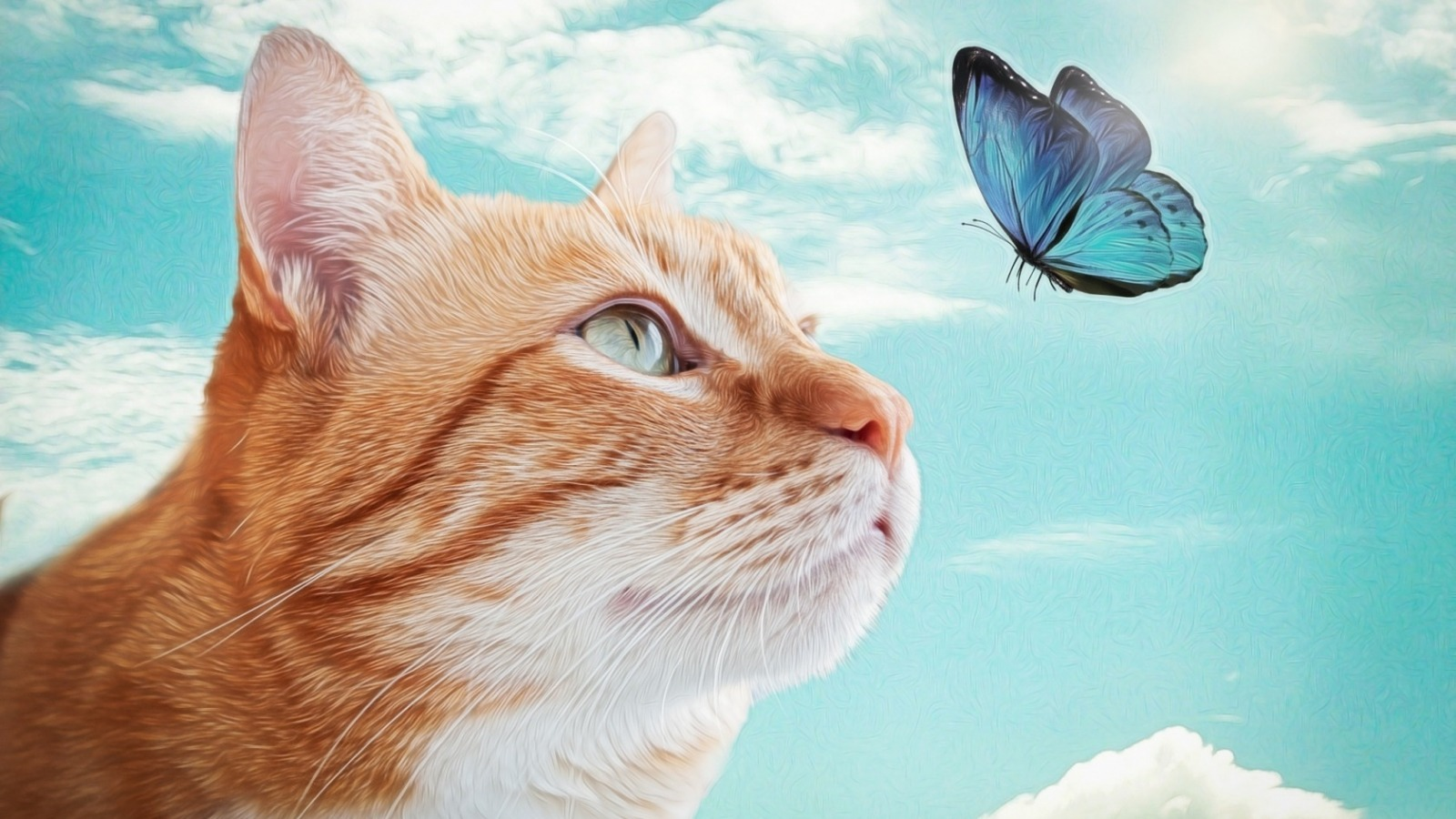 Cats Images Cat And Butterfly Hd Wallpaper And Background Photos