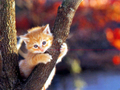Cute Little Kitten - cats wallpaper