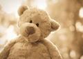 Cute Teddy - stuffed-animals photo