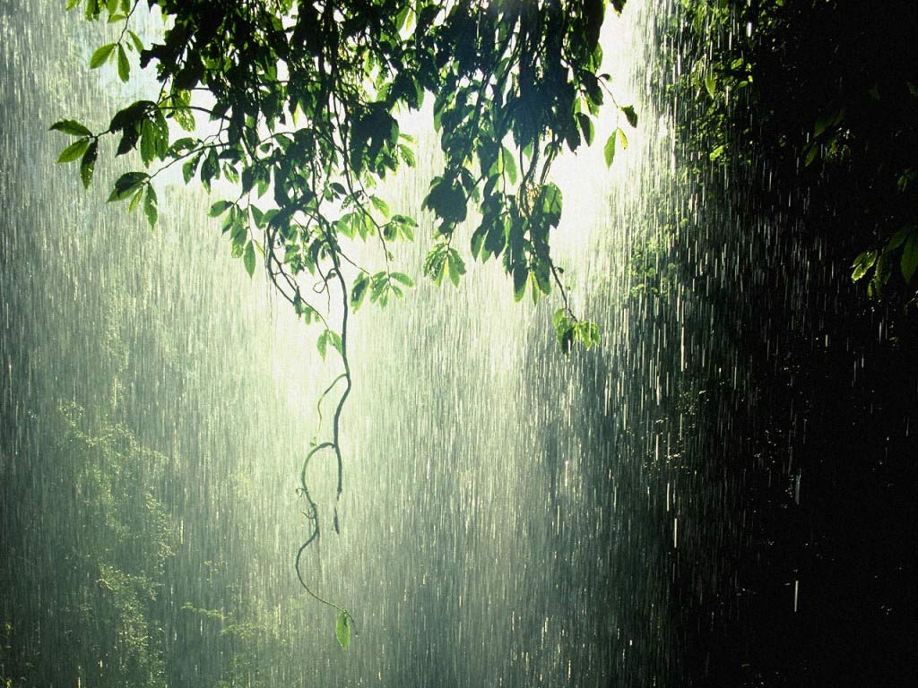 Rain images Forest Rain HD wallpaper and background photos
