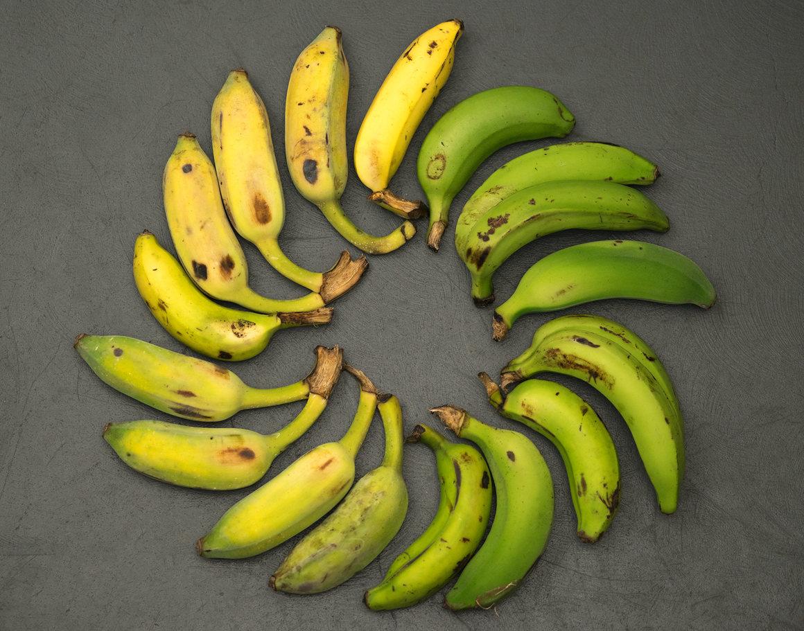 bananas images gros michel bananas hd wallpaper and background