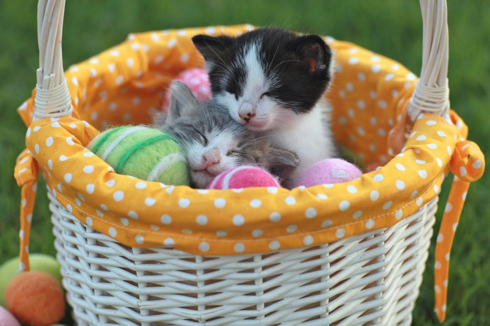 Happy Easter Kitties