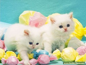 Happy Easter Kitties