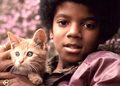 Michael Jackson  - the-jackson-5 photo