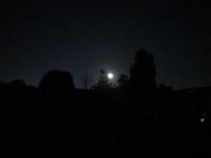My front yard at night