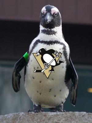 Penguins for Penguins pittsburgh penguins 30900756 376 500
