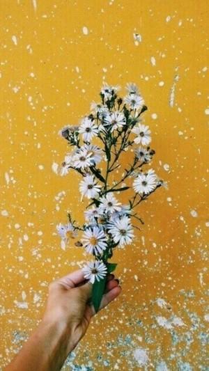 aesthetic Цветы ❀