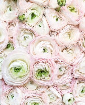 aesthetic fleurs ❀