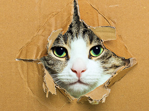 cat پیپر وال