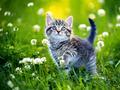 cat wallpaper - cats wallpaper