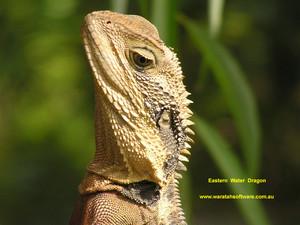 east water dragon