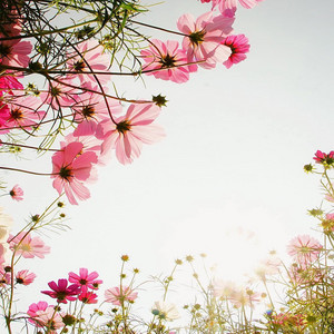 hoa ✿