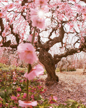 flores ✿
