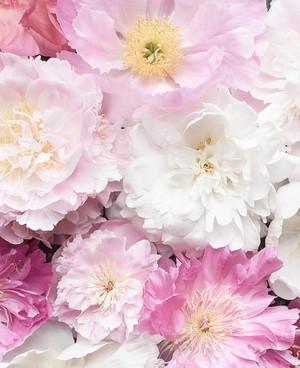 fleurs ✿