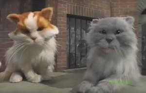 BBC gatos eyes Jimmy and Juke