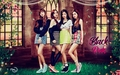 BLACK pink #WALLPAPER