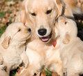 Beautiful Dogs - dogs photo