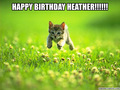 Happy Birthday Dear Heather 🎁