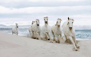 घोड़े on the समुद्र तट
