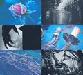 Mood Board - the Beast - disney-princess fan art