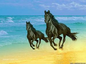 और horse
