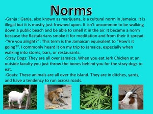 Norms Of Jamaica