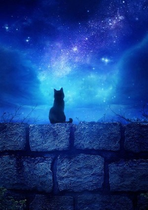 Shadow waited for the magic to happen, because Pusa know about such things.