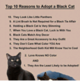 Top 10 Reasons To Adopt A Black Cat - cherl12345-tamara photo