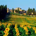 Tuscany, Italy - europe photo