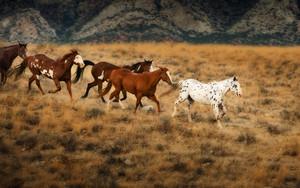 Wild घोड़े in Wyoming
