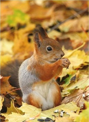 squirell❤