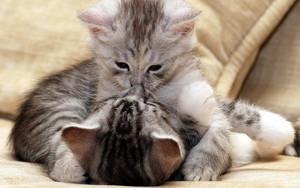 Affectionate Kitties
