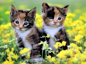 Among The Buttercups ♥