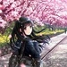 Anime In Cherry Blossom - cynthia-selahblue-cynti19 icon