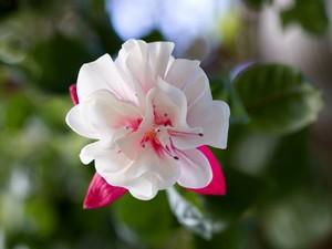 Beautiful 花
