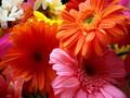 Beautiful Flowers 💐 - bernadettes-angels-and-more wallpaper