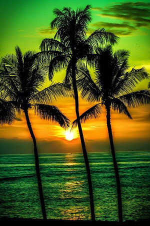 Beautiful Palm Trees