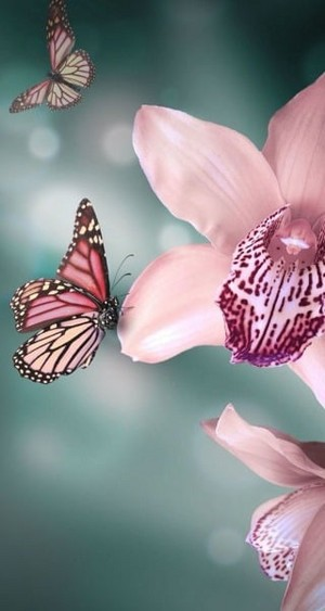 Beautiful butterfliesƸӜƷ ❤
