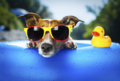 Cool for the Summer - dogs photo