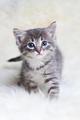 Cute Little Kitten - cats photo