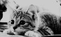 Cute Little Kitten  - gdragon612 photo