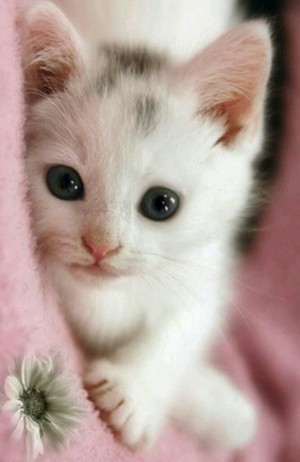 Cute Little Kitten