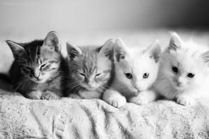 Cute Little anak kucing