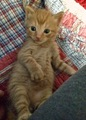Cute Little Kitten - cherl12345-tamara photo