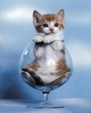 Kitty Modeling